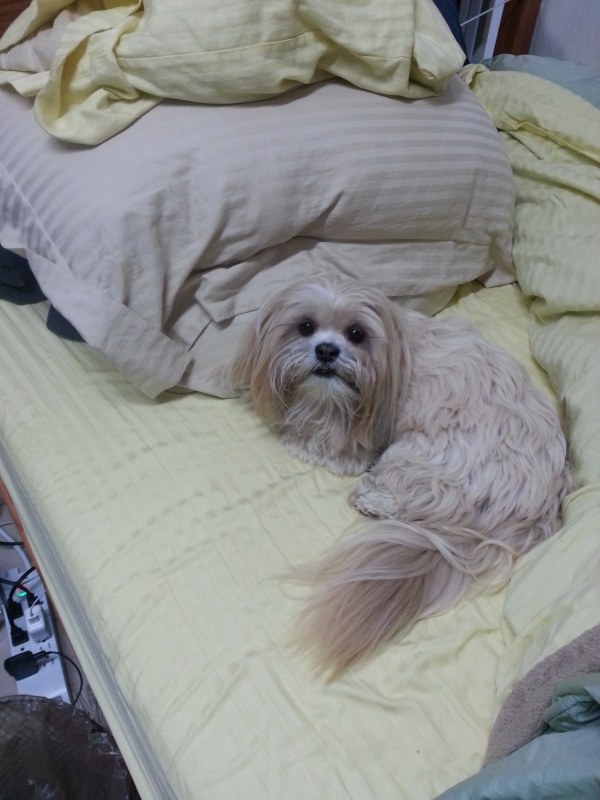 Noga refuses to get out of bed on a rainy morning!